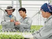 Thị trường - Tiêu dùng - Vượt lên nền nông nghiệp 'cơ bắp'