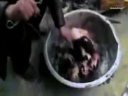 Thế giới - Phẫn nộ cảnh chó bị luộc sống, vùng chạy khỏi nồi ở TQ