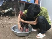 Tin tức trong ngày - Kỹ nghệ nuôi gà: Mắc màn, rửa chân cho gà Đông Tảo