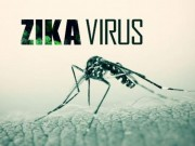 Năm 2017, dịch bệnh do virus Zika sẽ không dừng lại