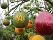 Tin tức trong ngày - Tròn mắt ngắm 1 cây có tới... 9 loại quả