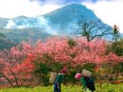 Du lịch - Những điểm du lịch, lễ hội Tết không thể bỏ qua ở miền Bắc