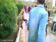 Phi thường - kỳ quặc - Ấn Độ: Cho ăn rồi tát cú trời giáng vào giữa mặt khỉ