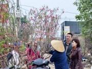 Thị trường - Tiêu dùng - Đào Nhật Tân, quất Tứ Liên tấp nập từ vườn ra chợ