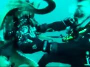 Thế giới - Video: Bạch tuộc khổng lồ dùng xúc tu đấu vật với thợ lặn