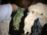 Phi thường - kỳ quặc - Kì lạ chú chó con màu xanh lá cây ở Anh