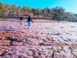 Chuyến du xuân về miền cổ tích ở ngoại ô Đà Lạt
