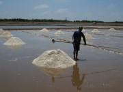 Thị trường - Tiêu dùng - Giữ muối để làm gì?