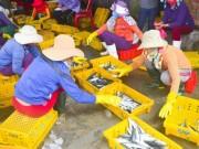 Thị trường - Tiêu dùng - Ngư dân Quảng Ngãi trúng đậm cá biển đầu năm