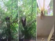 Thế giới - Hổ mang khổng lồ điên cuồng tấn công mèo sau cửa kính