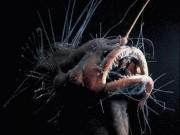 """Con người  """" hạ độc """"  sinh vật ở khe nứt sâu nhất thế giới"""