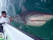 VĐV cử tạ Mỹ đối đầu cá mập bò khổng lồ giữa đại dương