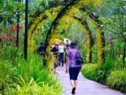 Ngắm vườn lan đẹp chưa từng thấy ở quốc đảo Singapore