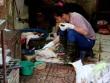 Nhiều bộ họp khẩn trước nguy cơ dịch cúm nguy hiểm