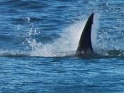 Thể thao - Biết có cá mập vẫn liều lướt sóng: Cái kết bi thảm