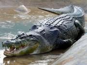 Thế giới - Cá sấu ăn sống chó nhà đang cố gắng bảo vệ chủ ở Mexico