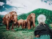 """Quên resort xa hoa đi, đến Thái Lan chăn voi mới là  """" chất """""""
