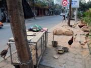 Tin tức trong ngày - Ảnh: Vỉa hè Hà Nội biến thành chuồng nhốt gà, trồng rau sạch