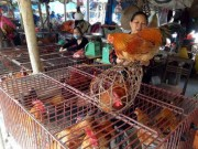 Thị trường - Tiêu dùng - Thương lái kiếm bội tiền từ người... nuôi gà