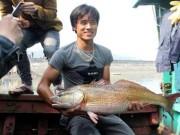 Tin tức trong ngày - Mệt mỏi vì phải canh giữ con cá vàng óng ánh, giá tiền tỷ