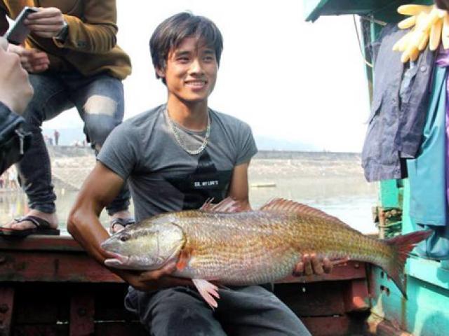 Cặp cá trà sóc nặng gần 1 tạ bắt từ Campuchia đưa về Hà Nội - 6