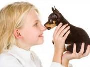 Sức khỏe đời sống - Chơi với thú cưng, cẩn thận lây bệnh chết người