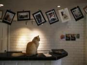 Tài chính - Bất động sản - Ngắm khách sạn siêu sang cho mèo đầu tiên trên thế giới