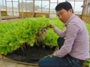 Thị trường - Tiêu dùng - Thu tiền tỷ từ rau thủy canh