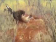 Thế giới - Báo đốm bị đàn chó săn hung dữ cắn xé tơi bời