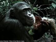 Thế giới - Băng đảng tinh tinh tàn bạo nhất, xé xác khỉ ăn sống