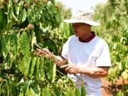 Thị trường - Tiêu dùng - Câu chuyện đằng sau ly cà phê chất lượng Việt