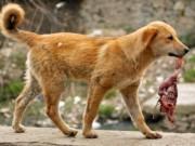 Thế giới - Nữ bệnh nhân bị chó hoang tha lôi, ăn nửa người ở Ấn Độ