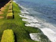 Đổ xô về phố biển Nha Trang ngắm rêu xanh