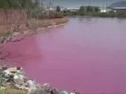 """Tin tức trong ngày - Lộ diện """"thủ phạm"""" khiến hồ nước hơn 10ha chuyển màu hồng"""
