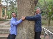 """Tin tức trong ngày - Cận cảnh """"cụ"""" sưa 400 tuổi được đại gia gỗ săn đón ở Bắc Ninh"""