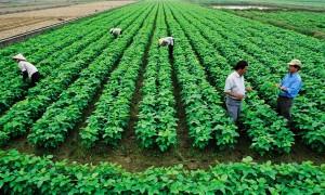 """Tài chính - Bất động sản - """"Các đại gia nhảy vào nông nghiệp thì đừng bỏ rơi nông dân"""""""