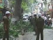 Video An ninh - Phó Thủ tướng yêu cầu Hà Nội xử nghiêm vụ chặt cây xanh