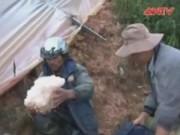 Video An ninh - Lâm Đồng: Mưa đá, lốc xoáy gây thiệt hại 10 tỷ đồng