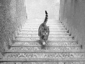 """Phi thường - kỳ quặc - Thế giới """"cãi nhau"""" vì bức ảnh một con mèo"""