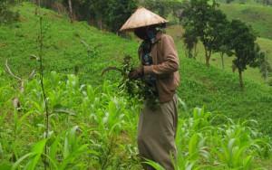 """Thị trường - Tiêu dùng - DN đầu tư vào nông nghiệp: Khó tìm được """"đất sạch""""!"""
