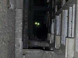 Phi thường - kỳ quặc - Giải cứu chú mèo bị mắc kẹt 5 năm trong vách tường
