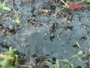 An ninh Kinh tế - Tiêu dùng - Bình Phước: Dân khốn khổ vì dầu điều tràn xuống suối