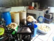 Video An ninh - Rùng mình phát hiện 3 cơ sở sản xuất bì heo ngâm hóa chất