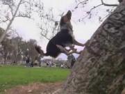 Thể thao - Kỳ thú: Chú chó nhảy parkour điêu luyện như người