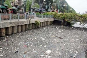 Tin tức Việt Nam - Cá chết trắng nổi dọc 4km kênh giữa Sài Gòn