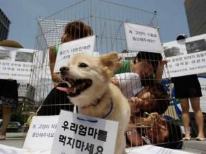 Tin tức trong ngày - Thế giới: Giết chó có thể phải ngồi tù 5 năm