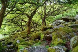 Điểm du lịch - Khu rừng cổ đẹp ma mị như trong phim kinh dị
