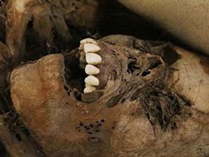 """Phi thường - kỳ quặc - """"Đứng tim"""" với xác ướp 900 tuổi há miệng cười"""
