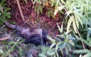 Tin tức Việt Nam - Phát hiện xác thanh niên đang phân hủy nặng ở ven đồi