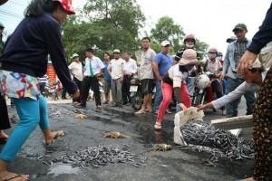 Tin tức trong ngày - Phản đối ô nhiễm, dân đổ tôm hùm chết ra quốc lộ